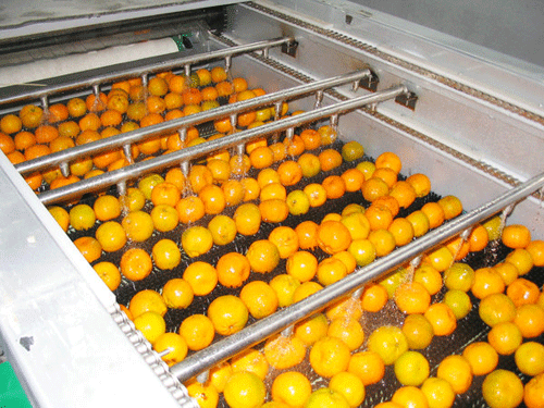 fruit brush and spray cleaning machine clean oranges